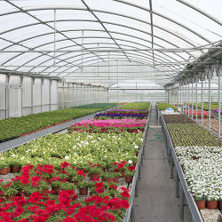 Roswell Seed Company grows plants and flowers in their own greenhouses