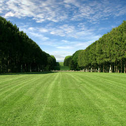 Roswell Seed Company provides outstanding lawn grass seed